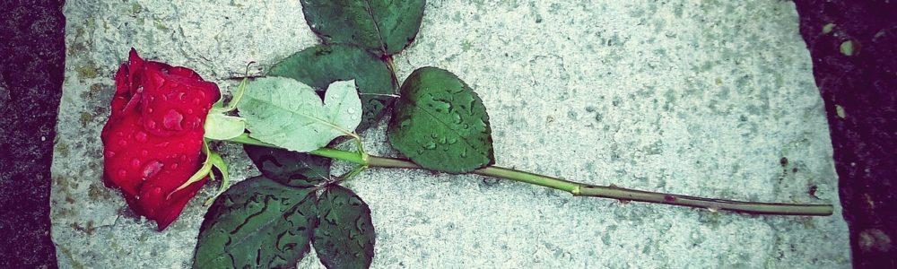róża gdańsk